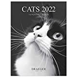Draeger Paris - Kleiner Wandkalender Katzen schwarz weiß - 2022