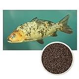 ULTRA KOI - Premium Futter SCHWIMMEND für Kois und Teichfische -- Alleinfuttermittel für Fische Koifutter, Fischfutter Aquarium und Gartenteich - Palettes Granulat - Ganzjahresfutter- (4,5mm, 3 kg)