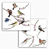 Komar 16003, Bunt Window-Sticker BIRDS Fensterdeko, Ornithologie, Fenstersticker, Fensterfolie, Vogel, Blaumeise, Vogelschaar, Vintage-16003, 31 x 31 cm, 2 Bogen