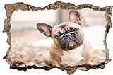 Fotografie Französische Bulldogge Wandtattoo Wandsticker Wandaufkleber D1900 Größe 70 cm x 110