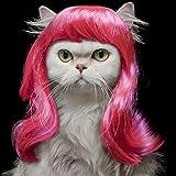 vcience MPK Katzenperücke, Blau und Magenta, Perücke für Katzen, niedliches Katzenkostüm, Katzen-Kopfbedeckung