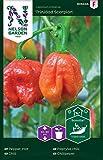 Nelson Garden 1933, Chili, Trinidad Scorpion, Samen (Einzelpackung)