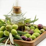 20 Stück Heirloom Olivensamen Für Den Garten Im Freien Der Immergrüne Bäume Mit Starker Wachstumsfähigkeit Pflanzt Kann Die Natur Verschönern