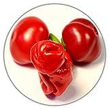 Peter Pepper'Penis' Chili / 20 Samen/skurilles Aussehen