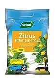 Westland Zitruspflanzenerde, Blumenerde, 8 Liter, 733933