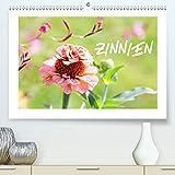 ZINNIEN (Premium, hochwertiger DIN A2 Wandkalender 2021, Kunstdruck in Hochglanz)