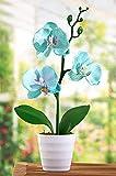 Dekoleidenschaft Orchidee im Topf, türkis, 28 cm hoch, Kunstpflanze, Zierpflanze, Bürop