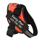Ferry Pier Hundegeschirr mit Namen und Telefonnummer, robust, verhindert Zerren, Ziehen oder Würgen, Training und Spazierengehen