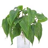 DWANCE 2pcs Dominik Blumen und Pflanzen Kunstpflanzen Efeutute Plastikpflanzen Unecht Pflanzen Zimmerpflanzen für Außenbereich Frühling Vase Deko Grün