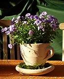2. Wahl !! Aktion !! Tasse 22 cm , echt Terracotta ohne Deko !! Terrakotta Garten Deko Blumentopf Pflanztopf Übertop