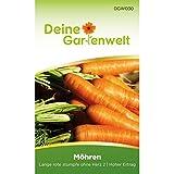 Möhren lange rote Stumpfe ohne Herz 2   Samen für Karotten   Möhrensamen   Karottensamen