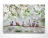 Bezaubernde Kirschblüte mit Spatzen-Kinder - als großes XXL Leinwand-Bild 120x80cm. Ideal als Hintergrund und Dekoration für Wohnzimmer & Schlafzimmer. Aufgespannt auf 2cm Holzrahmen
