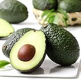 10Pcs Avocado Samen für Jahr-Runde Gewächshaus Einpflanzen Mehrjährige Gesundes Obst Baum Hat Wirtschafts Wert Sommer Ergebnisse Gärtner genießen Pflanzen