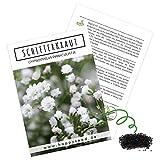Schleierkraut Samen mehrjährig & winterhart (Gypsophilia paniculata) - Herrlich duftendes Blütenmeer & perfekt in Kombination mit Blumensträuß
