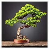 xinxinchaoshi Künstlicher Bonsai Welcome Pine Cliff Cypress Simulation Bonsai Wohnzimmer Hoteleingang Dekoration Ornamente Lila Sand Blume Pot Topfpflanzen Zimmerbonsai Bonsai (Color : C)