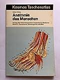 Anatomie des Menschen III. Rumpfwand, Beckengürtel und Bein. Kursus der makroskopischen Anatomie für Mediziner