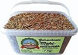 Futterhof getrocknete Mehlwürmer 1 kg (=6,25ℓ) im Kübel, Premium Qualität, GRATIS Versand mit DHL