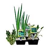 Wasserpflanzen-Paket für Mini-Teich - 15er Set Wasserpflanzen, winterhart - Für 0,5-1 m³ Wasser - Inklusive Pflanzkorb-Sets - Van der Velde Wasserpflanzen