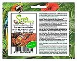 Stk - 15x Acer saccharum Zucker Ahorn Baum Bonsai Garten Pflanzen - Samen B511 - Seeds Plants Shop Samenbank Pfullingen Patrik Ipsa