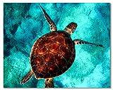 Bougimal Malen Nach Zahlen Erwachsene Tiere mit Rahmen inklusive Pinsel und Acrylfarben - 40 x 50 cm, Schildkröte