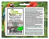 Stk - 10x Monilaria moniliformis Sukkulenten Garten Pflanzen - Samen B1774 - Seeds Plants Shop Samenbank Pfullingen Patrik Ipsa