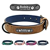 Didog Hundehalsband, weiches, gepolstertes, Leder, mit personalisierbarem, graviertem Namensschild, D-Ring. Für kleine und mittelgroße Hunde geeig