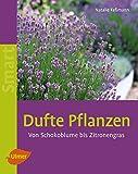 Dufte Pflanzen: Von Schokoblume bis Zitronengras