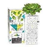 Bottlecrop - Roter Blattsalat | Salat aus der Flasche | Anzuchtsystem | Urban Farming | Hydrok