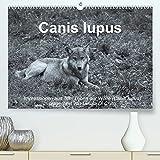 Canis lupus (Premium, hochwertiger DIN A2 Wandkalender 2021, Kunstdruck in Hochglanz)