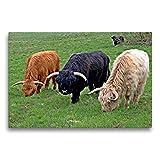 CALVENDO Premium Textil-Leinwand 75 x 50 cm Quer-Format Schottische Hochlandrinder in DREI Farben, Leinwanddruck von Christine Schmutzler-Schaub