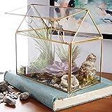 Terrarium Glas,Geometrisches Terrarium Pflanzen Terrarium Glas Saftig, Luftpflanze Kreative Weinlese Miniaturgeometrische Geformte Glas-Blumen-Raum-kreative Hauptdekoration Saftige Moos Container