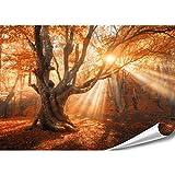 PMP-4life XXL Poster Magischer Wald   140x100cm   hochauflösendes XXL Fotoposter Alter-Baum   Natur Poster extra groß   XL Wand-deko Bild Landschaft Bäume Blumen Wald