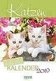 Katzen (2-Wo.) 236719 2019: Literarischer 2-Wochenkalender * 2 Wochen 1 Seite * literarische Zitate und Bilder * 16,5 x 24