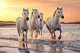 VLIES Fototapete-PFERDE-(PF2935)-Tiere Pferde Fohlen Pony Natur Strand Gebirge See Wald Wiese Blumen Sonnenuntergang Wandbild Wandtattoo Poster Dekoration