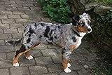 LFNSTXT Puzzle für Erwachsene und Kinder, 500 Teile, Holzpuzzle, Australien-Schäferhund, bunt, Herding Dog, 52 x 38 cm