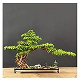 xinxinchaoshi Künstlicher Bonsai Welcome Pine Bonsai-Pflanze Podocarpus chinensis Landschaft Micro-Landschaftseingang Hotel Neue Ornamente, Geschenke und Kunsthandwerk Zimmerbonsai Bonsai