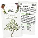 Bonsai Baum Samen Schnee Eukalyptus: Premium Schnee Eukalyptus Samen für 5 Bonsai Pflanzen winterhart – Bonsai Samen für den Mini Garten – Eukalyptus Pflanze Saatgut – Bonsai winterhart von OwnGrown
