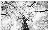 Fototapete 3D Effekt Tapete Schwarzwald Großer Baumkunsthintergrund 200X140Cm Fototapete Vlies Tapeten Wand Wallpaper Dek