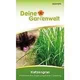 Katzengras Samen | 10 g Katzengrassamen | Saatmischung für 5 Töp