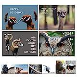 Geburtstagskarten Postkarten Set (10 Motive) lustig Glückwunschkarten, Postkarten Tier Karten mit lustigen Sprüchen Geschenk Karte zum Geburtstag Geburtstagsgeschenk Grußkarten Geburtstagskarte