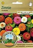 Zinnie Thumbelina Saatband für Balkon & Terrasse tolerant gegen Krankheiten und Trockenheit reichblühend 53080