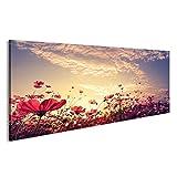 islandburner Bild Bilder auf Leinwand Landschaft Natur Hintergrund der schönen rosa und roten Kosmos Blume Feld mit Sonnenschein. Vintage Farbton Wandbild, Poster, Leinwandbild FB