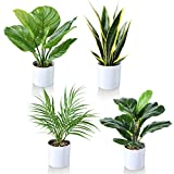 Kazeila Kunstpflanzen 40cm Monstera/Schlangenpflanze/Areca Palme/Grün gestreifte Pflanze,im Topf für Innen und Aussen. Für Zuhause oder Büro als Moderne Dekoration im 4er Set erhältlich