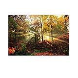 Startonight Bild auf Glas - Herbst Wald - Abstrakte Modernes Acrylglasbild - Deko Glas 60 x 90 cm