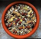 cura-canin 5 kg natürliches Eichhörnchen Futter in Premium Qualität Eichhörnchenfutter der Spitzenklasse Streufutter Futterhaus