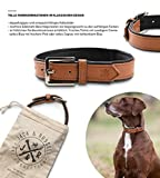 Jack & Russell Premium Leder Hunde Halsband Lilly - Lederhalsband Kalbleder - Hundehalsband Echtleder Lilly (S, Braun/Schwarz)