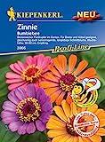 Zinnie 'Bumblebee',1 Portion