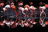 Muralo Selbstklebende Fototapete 368x280 Wohnzimmer Schwarm von Flamingos VÖGEL Moderne Tapete Schlafzimmer Wandbilder Wandtapete Wandtattoo XXL Br. 368 cm x Hö. 280