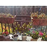 LSXIAO-Balkonumspannungen Gartennetz Zaun Mesh Roll Heiß Getaucht Verzinkt Hardware-Stoff Quadratisches Netz 2x2cm Mit Schneidezange Für Geflügelställe, Bauernhof (Color : Silver, Size : 0.5x20m)