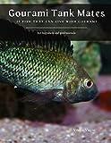 Gourami Tank Mates: 13 Fish that can Live with Gourami